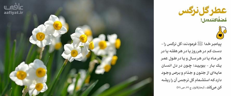 عطر گل نرگس